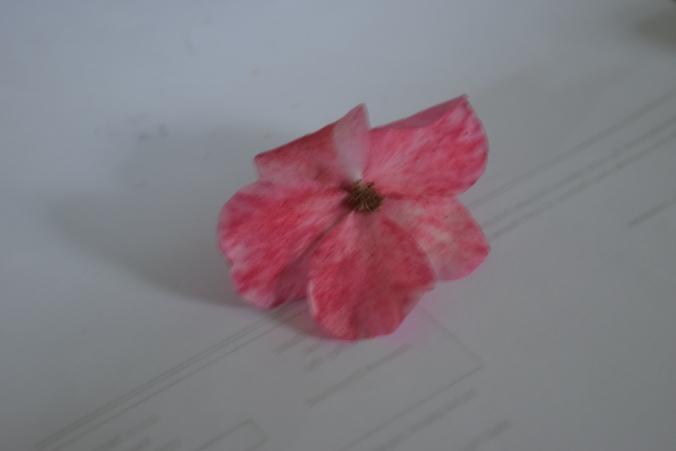 Five Petals.JPG